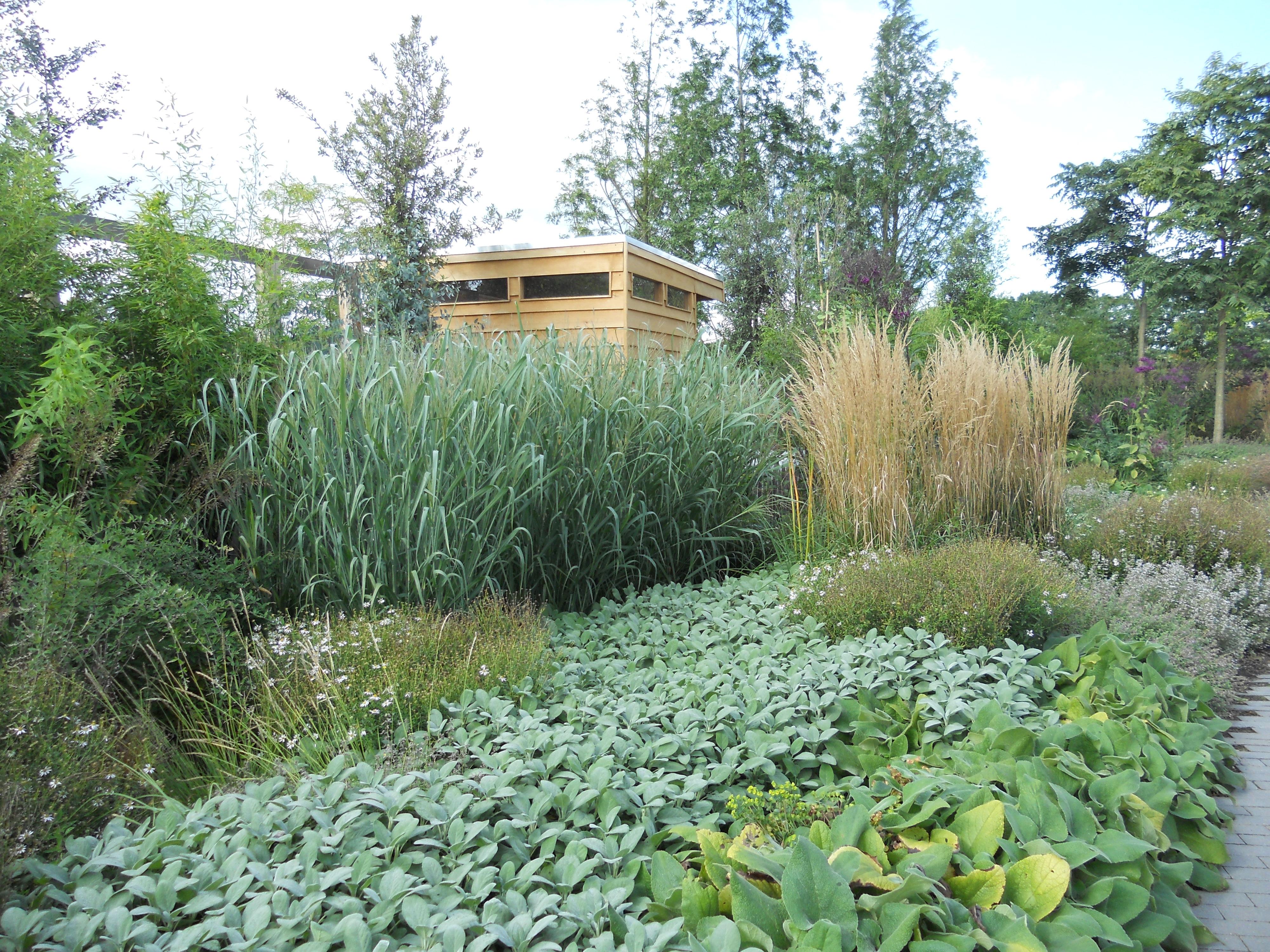 Le graminacee nei giardini linee co for Laghetti nei giardini